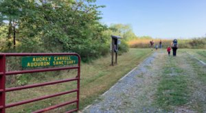 Audrey Carroll Audubon Sanctuary In Maryland Offers A Serene Stroll And Bountiful Bird Watching