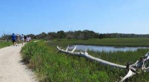Walk Or Ride Alongside The Ocean On The 1.8-Mile Botany Bay Beach Walk In South Carolina