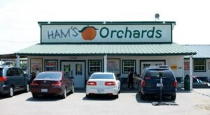 With A Berry Patch, BBQ Joint, And Bakery, Ham Orchards Is The Perfect Texas Summer Destination
