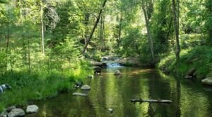 Horton Creek In Arizona Is Spring-Fed Fun For The Whole Family