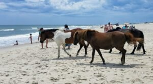 Assateague State Park Is The Single Best State Park In Maryland And It's Just Waiting To Be Explored