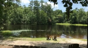 Enjoy Lake Views, Loads Of Trails, A Playground, And History At Manchester State Forest In South Carolina