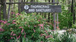 The 372-Acre Thorncrag Bird Sanctuary In Maine Is The Largest Bird Refuge In New England