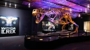 You Can Visit The World's Largest Touring T-Rex Skeleton In Texas This Summer
