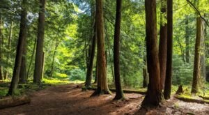 At Over 350 Years Old, Some Of The Oldest Trees In The World Are Found In Pennsylvania