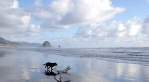 10 Dog-Friendly Beaches In Oregon That Are Perfect For Summer Adventures