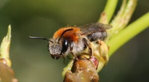 Watch Where You Step This Season. Ground Bees Are Taking Over South Carolina's Sandy Soil To Build Nests