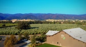 Tour And Taste At The Séka Hills Olive Mill And Tasting Room In Northern California