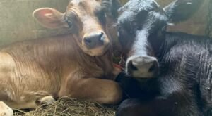 Spend Time With Animals And Stock Up On Fresh Dairy When You Visit This Farm In Vermont