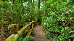 Redwood National And State Parks Is The Best Park In Northern California And It's Just Waiting To Be Explored