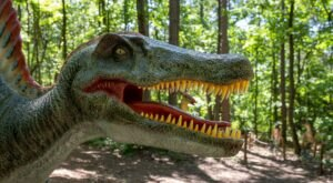 Take A Hike Along The Only Dinosaur Trail In South Carolina This Summer At Roper Mountain