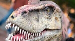 The Kiddos Will Go Wild Over The Upcoming Drive Thru Dinosaur Hunt At Upton Farms In North Carolina