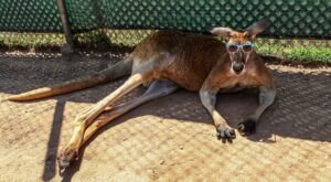 Play With Kangaroos And Wallabies At Roos2U In Maryland For An Adorable Adventure