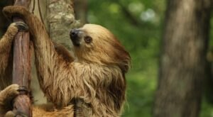 Play With Sloths At Southwick's Zoo In Massachusetts For An Adorable Adventure