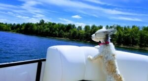 9 Dog-Friendly Beaches In Kentucky That Are Perfect For Summer Adventures