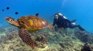 Hawaii Is Home To Turtle Bay Resort, A Little-Known Scuba Diving Resort