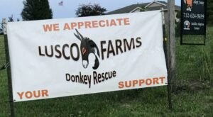 Cuddle The Most Adorable Rescued Farm Animals For Free At Lusco Farms Donkey Sanctuary In Iowa