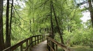 Walk Or Ride Alongside The Swamp On The 5-Mile Lake Martin Loop Trail In Louisiana