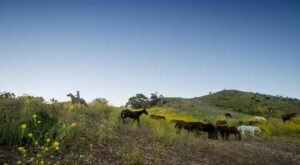 Experience A Luxury Dude Ranch In Southern California With Endless Amenities At The Alisal