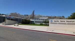 To See The Largest Collection Of Southern California Marine Life In The World For Free, Visit Cabrillo Marine Aquarium