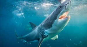 A 1,400-Pound Great White Shark Has Been Spotted Off The Jersey Shore
