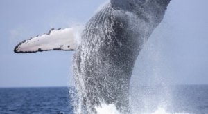 Don't Miss The Opportunity To Spot Whales Off The Shore Of New Jersey