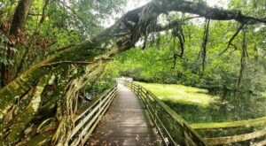 The Gorgeous 2.25-Mile Hike In Florida's Marshlands That Will Lead You Past Huge Cypress Trees