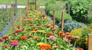 You Can Cut Your Own Flowers At The Festive Spring Ledge Farm In New Hampshire
