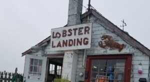 With More Than Just Lobster Rolls, Lobster Landing In Connecticut Is An Amazing Outdoor Seaside Dining Experience