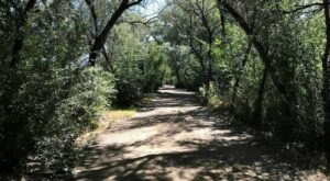 Walk Right Along The Animas River On This Shaded And Beautiful Family-Friendly Hike In New Mexico