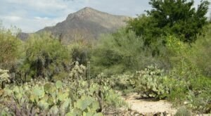 Stroll Through 49 Acres Of Gardens And Dine At An Outdoor Bistro At Tohono Chul In Arizona