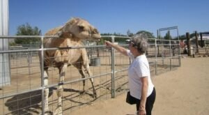 Visit Hesperia Zoo In Southern California To See Native, Rare, And Endangered Wildlife Species From Six Continents