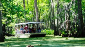 Learn The Tales Of The Swamps With A Tour Of Honey Island Swamp Near New Orleans
