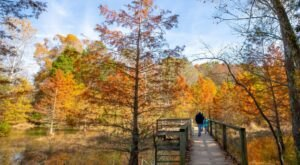 When And Where To Expect Kentucky's Fall Foliage To Peak This Year