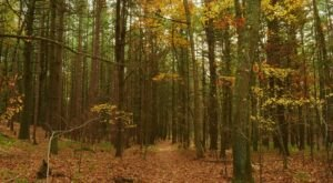 This Creepy Spot Deep In The Woods Of Rhode Island Is Like Something Out Of A Horror Movie