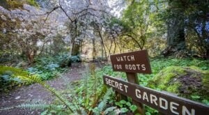 Visiting This Peaceful Woodland Garden In Washington Is Like Stepping Into A Fairytale