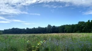 Visit Aullwood, A 200-Acre Ohio Sanctuary Filled With Nature Trails, Meadows, And Wildflowers