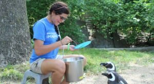 Play With Penguins At Blank Park Zoo In Iowa For An Adorable Adventure