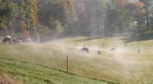 You Can Go Camping With Alpacas At Misty Acres Alpaca Farm In Maine