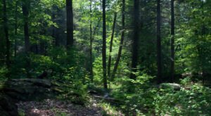 Check Out The Beautiful And Underrated Clarence Fahnestock State Park In New York