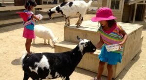 The Farm Animals At Zoomars River Street Ranch In Southern California Are So Darn Cute That You Won't Want To Stop Cuddling Them