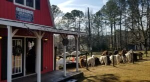 Creekwater Alpaca Farm In Georgia Makes For A Fun Family Day Trip