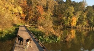 The Gorgeous 2.5-Mile Hike In Mississippi's Tombigbee National Forest That Will Lead You Past A Lake