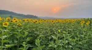 Most People Don't Know About This Magical Sunflower Field Hiding Near Pittsburgh