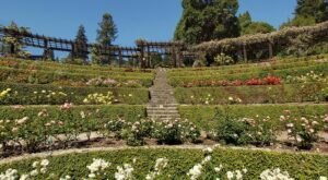 Stroll Through 1,500 Rose Bushes At Berkeley Rose Garden In Northern California For A Gorgeous Outing