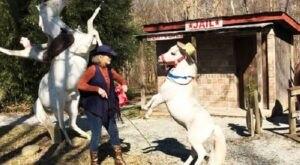 Land Of Little Horses, The Most Unique Theme Park In Pennsylvania, Is A True Hidden Gem