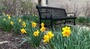 Stroll Through The Enchanting 735-Acre Mizzou Botanic Garden In Missouri, A Nature Lover's Dream
