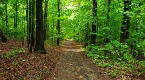 This 1-Mile Trail In Louisiana Leads To An Incredible Mountain Top View