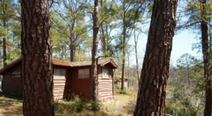 You'll Have A Front Row View Of The Texas Lost Pines In These Cozy Cabins At Bastrop State Park