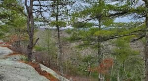 This Loop Trail Hike Is The Perfect Way To Explore The Gorgeous Wickaboxet Management Area